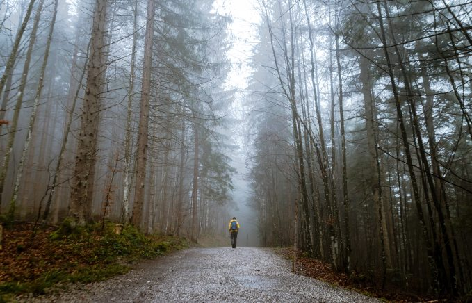 alone-autumn-mood-forest-cold-397096.jpg