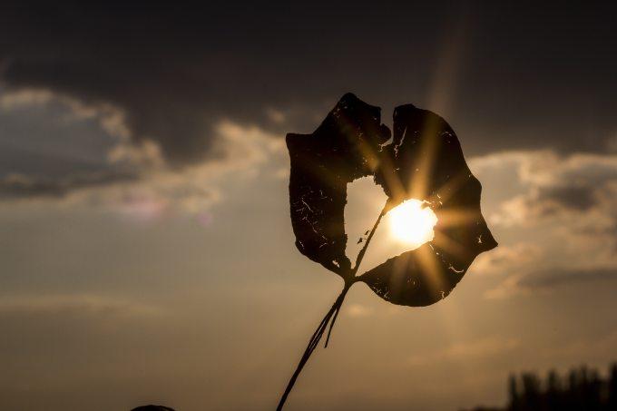 autumn-heart-leaf-39379.jpg