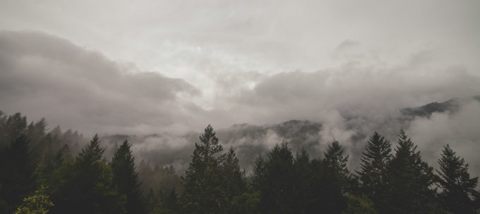 clouds-fog-forest-6718.jpg