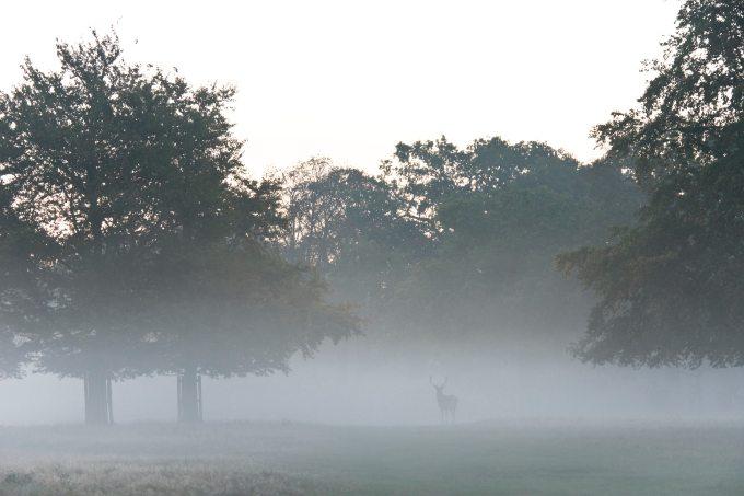 buck-cold-deer-1659683.jpg